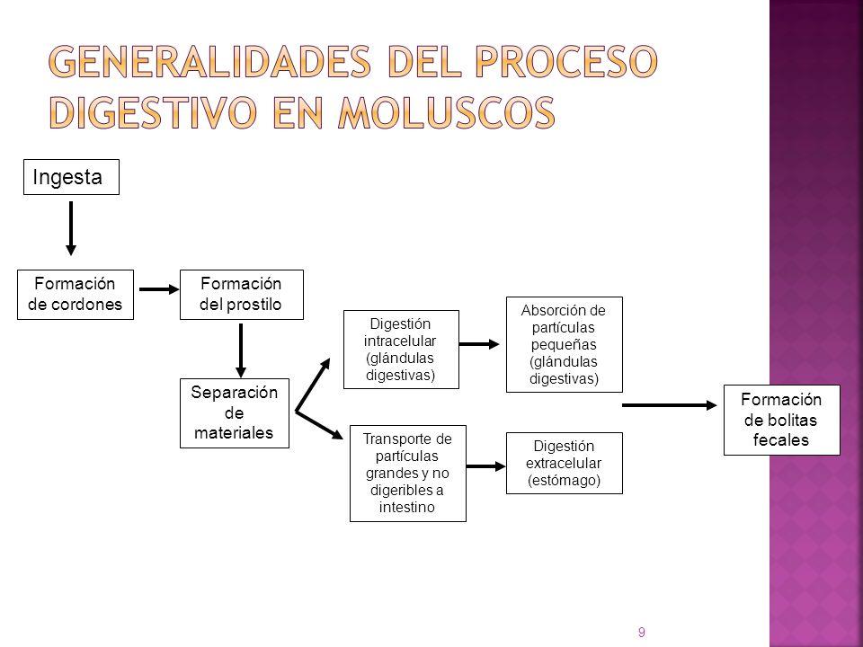 Generalidades del proceso digestivo en moluscos