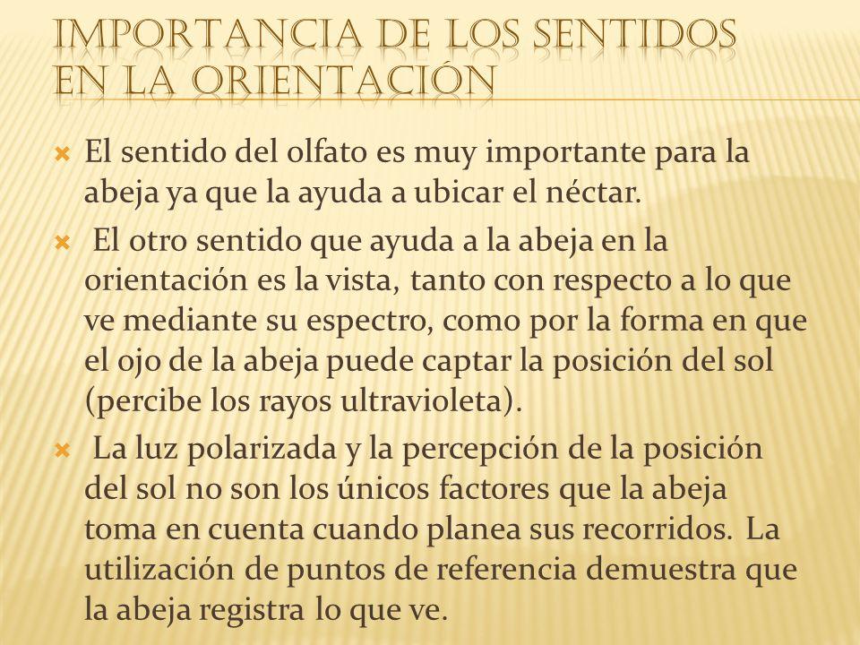 IMPORTANCIA DE LOS SENTIDOS EN LA ORIENTACIÓN
