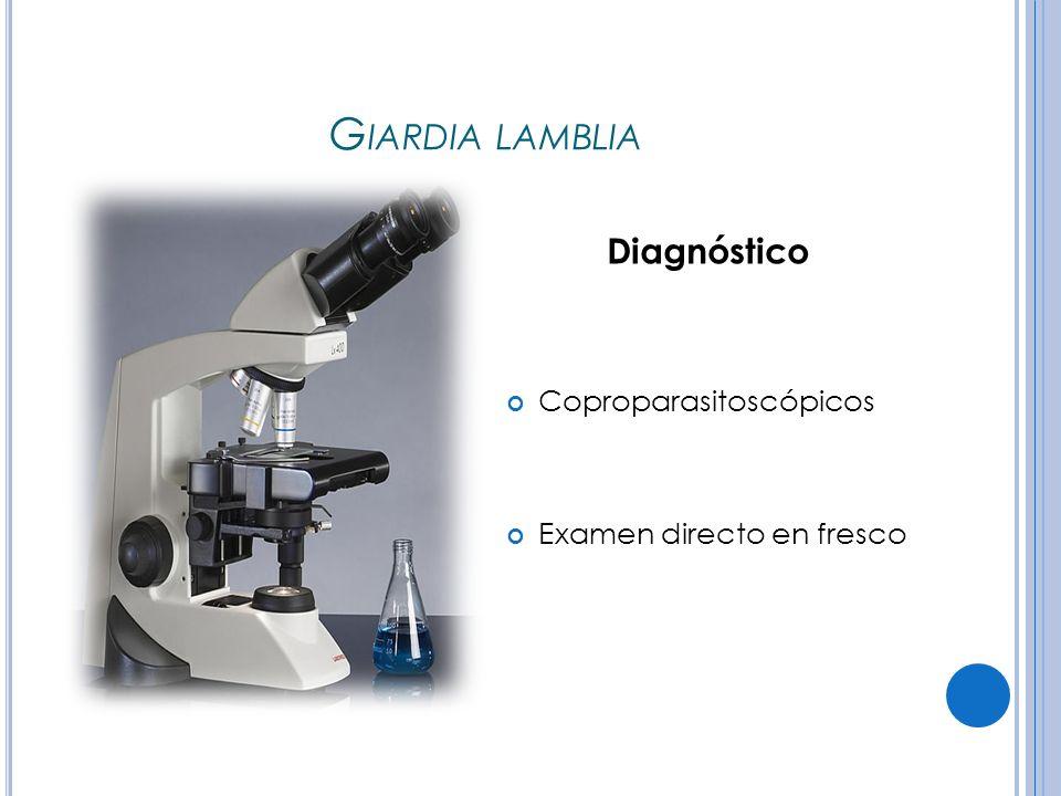 Giardia lamblia Diagnóstico Coproparasitoscópicos