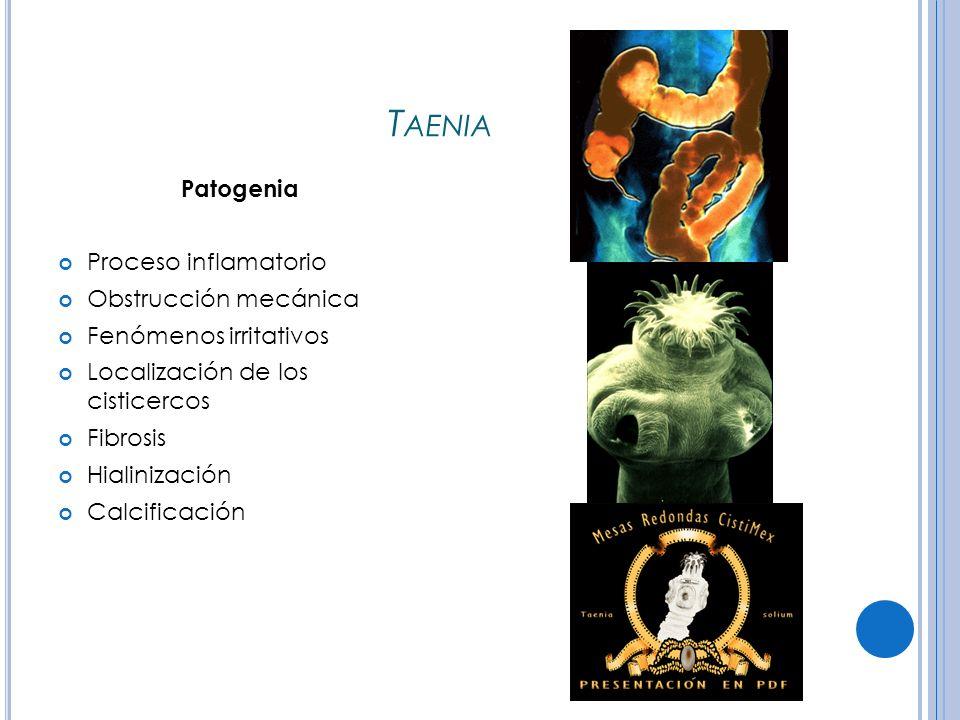 Taenia Patogenia Proceso inflamatorio Obstrucción mecánica