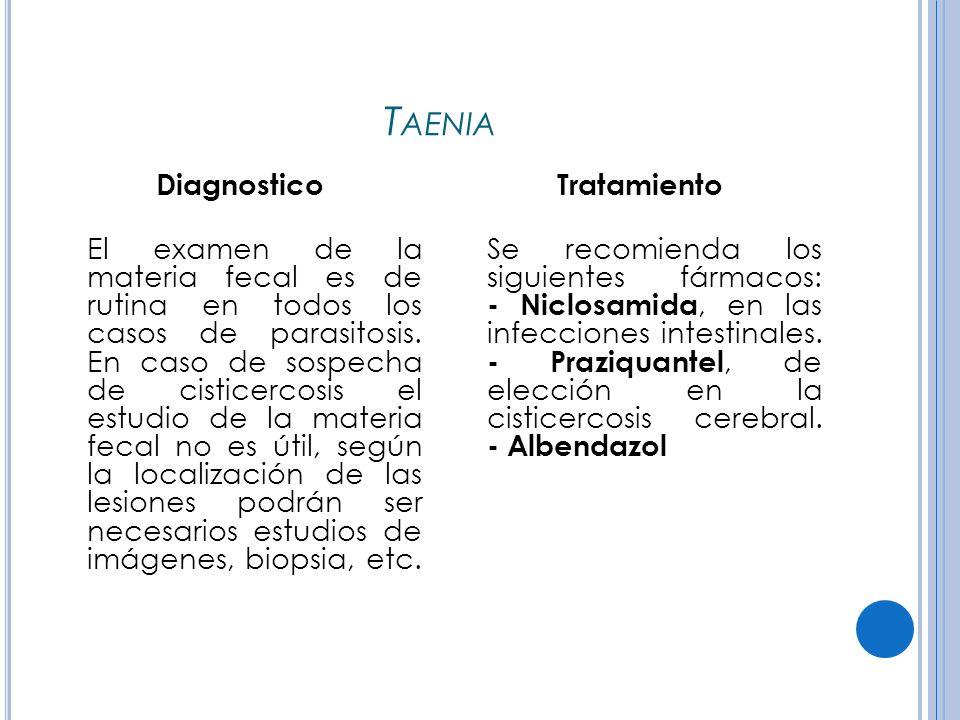 Taenia