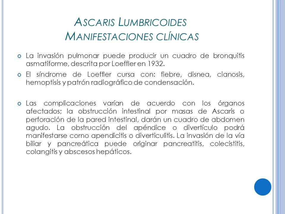Ascaris Lumbricoides Manifestaciones clínicas