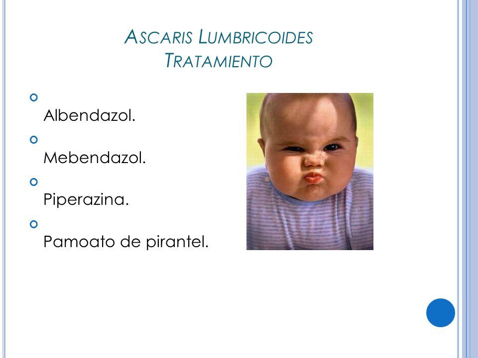 Ascaris Lumbricoides Tratamiento