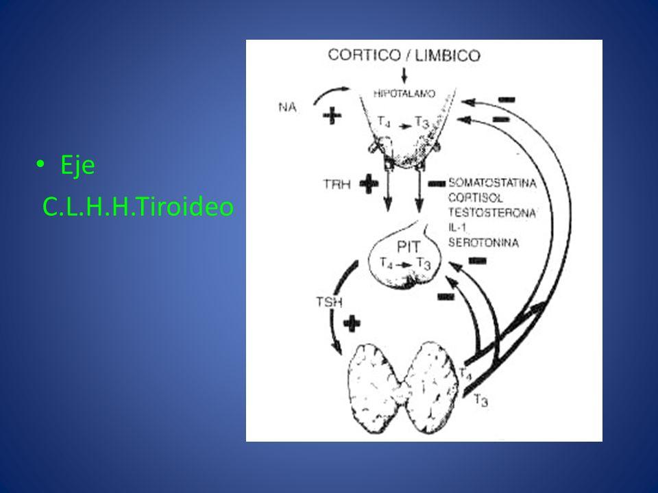 Eje C.L.H.H.Tiroideo