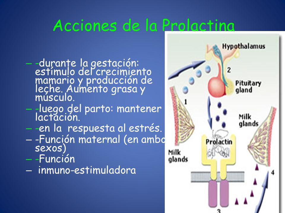 Acciones de la Prolactina