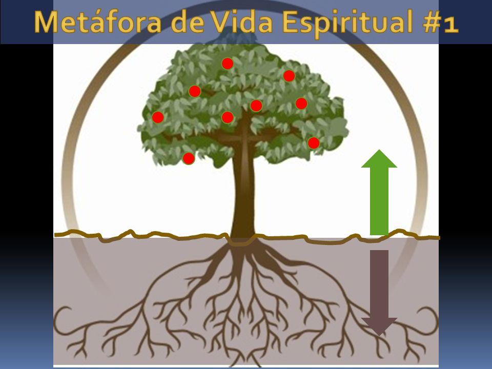 Metáfora de Vida Espiritual #1