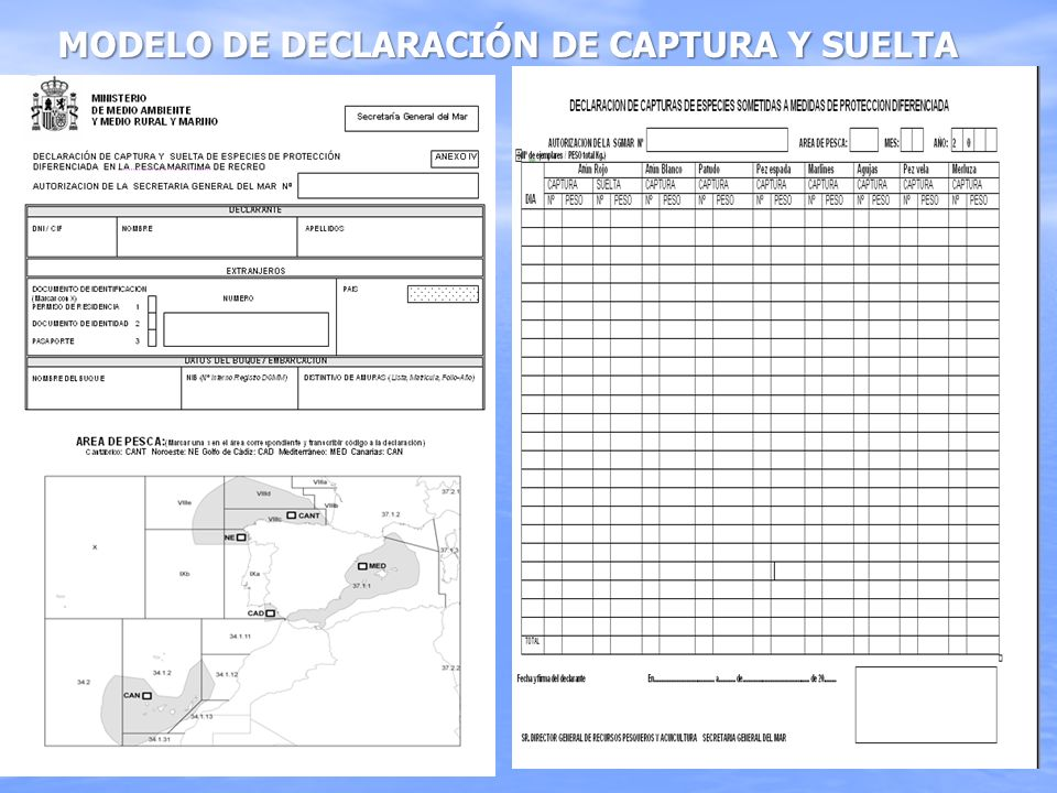 MODELO DE DECLARACIÓN DE CAPTURA Y SUELTA