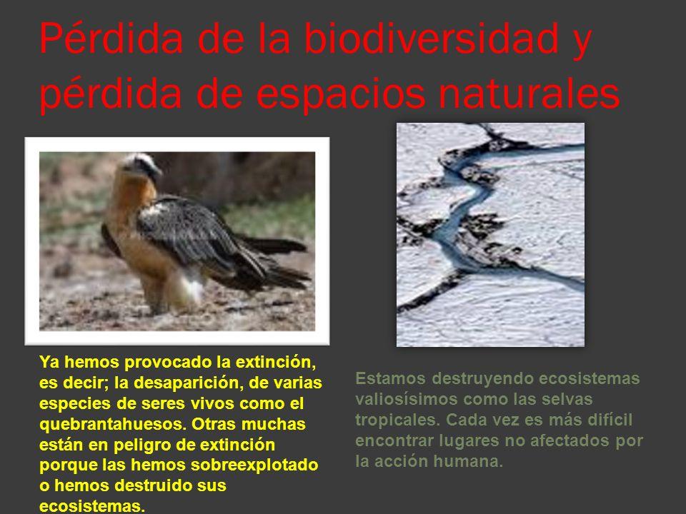 Pérdida de la biodiversidad y pérdida de espacios naturales