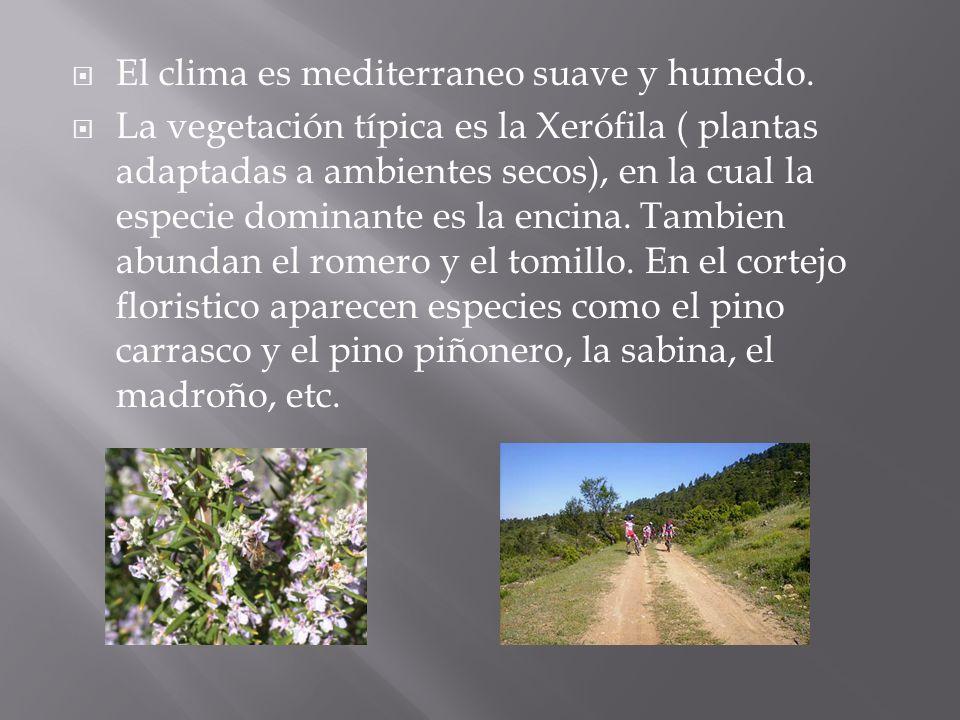 El clima es mediterraneo suave y humedo.