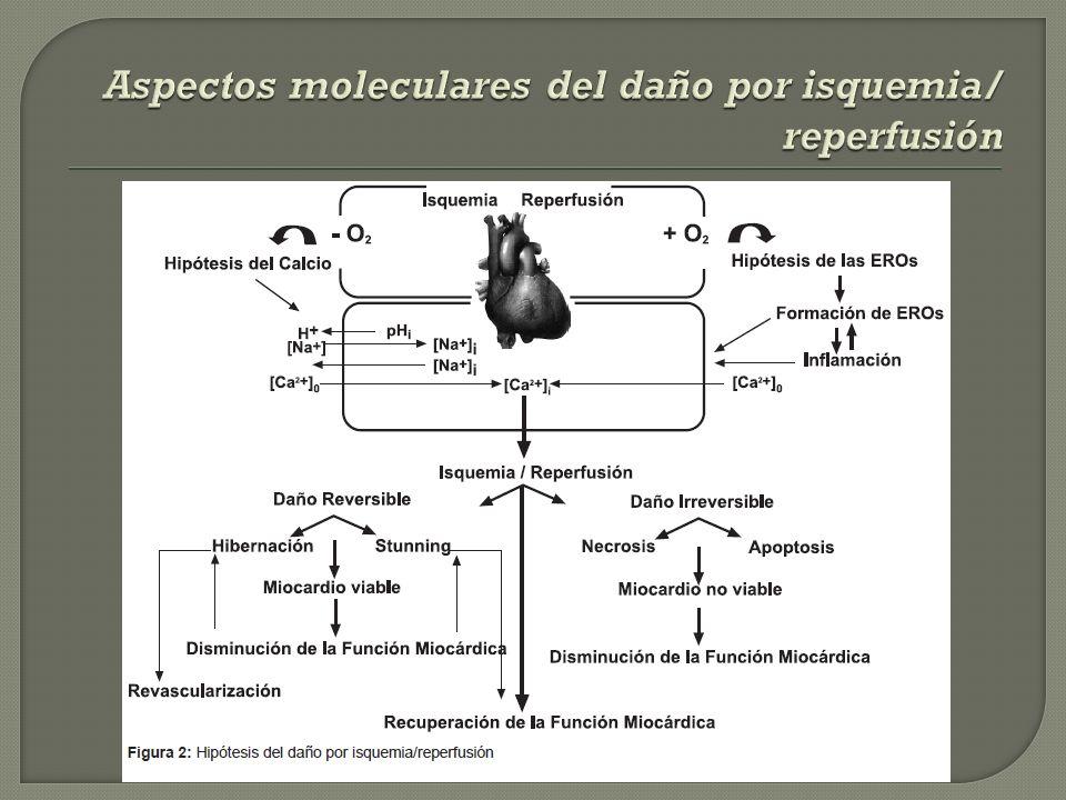 Aspectos moleculares del daño por isquemia/ reperfusión