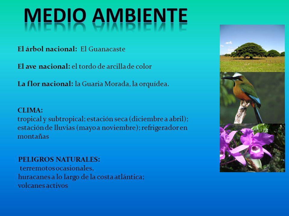 MEDIO AMBIENTE El árbol nacional: El Guanacaste