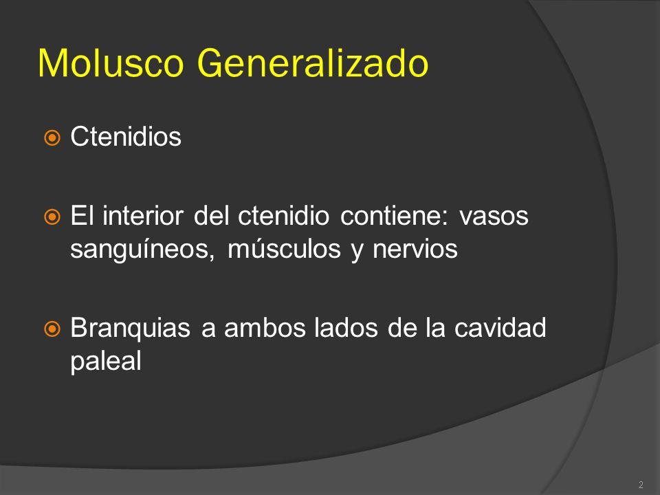 Molusco Generalizado Ctenidios