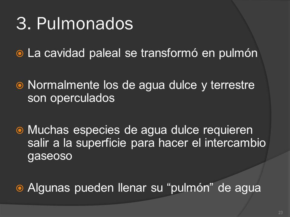 3. Pulmonados La cavidad paleal se transformó en pulmón