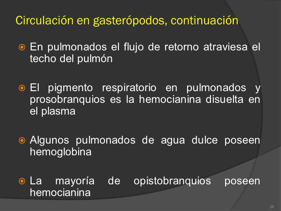 Circulación en gasterópodos, continuación