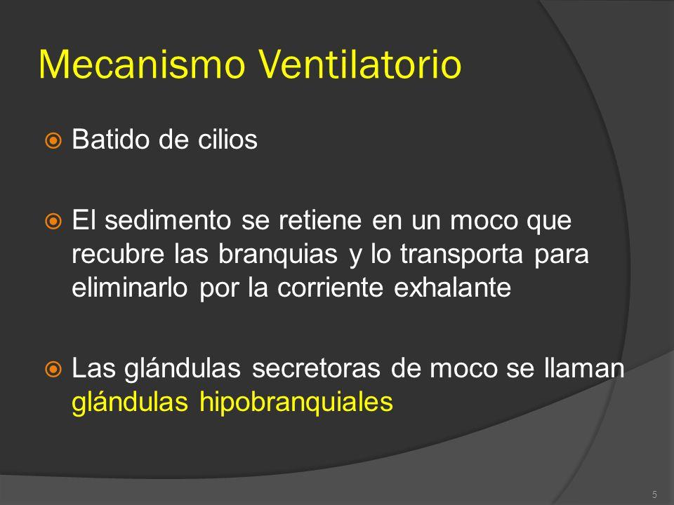 Mecanismo Ventilatorio