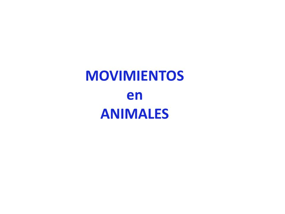 MOVIMIENTOS en ANIMALES