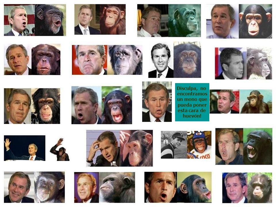 Disculpa, no encontramos un mono que pueda poner esta cara de huevón!
