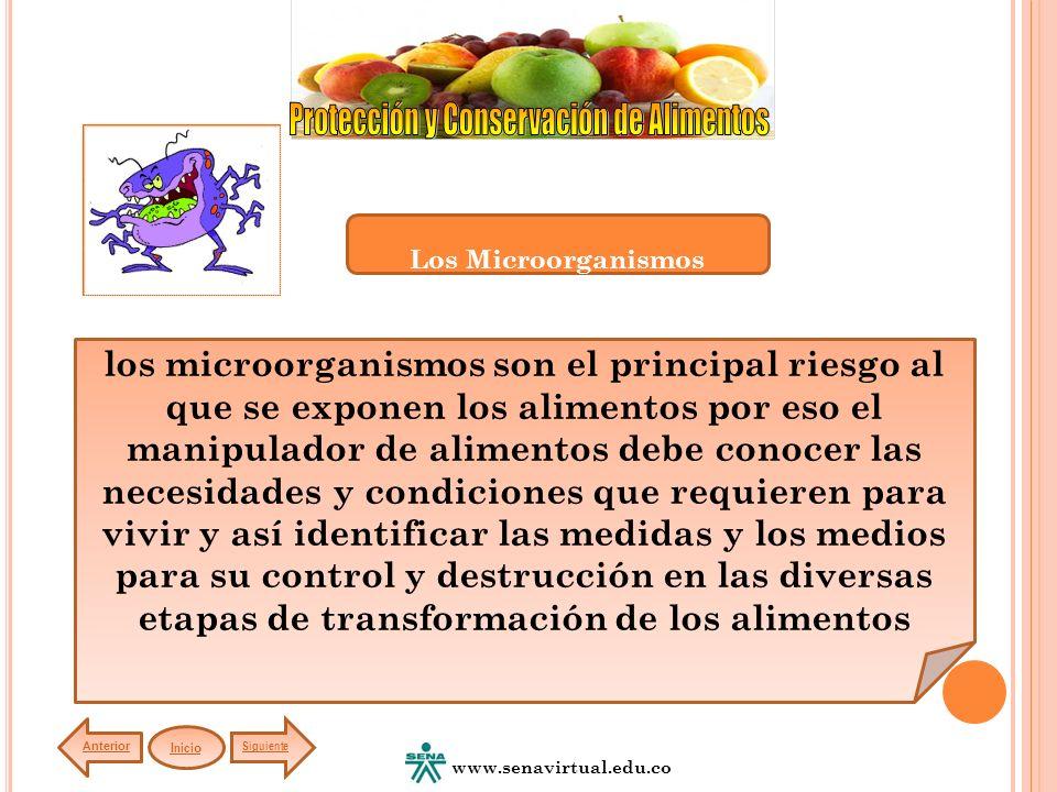 Los Microorganismos los microorganismos son el principal riesgo al que se exponen los alimentos por eso el manipulador de alimentos debe conocer las.