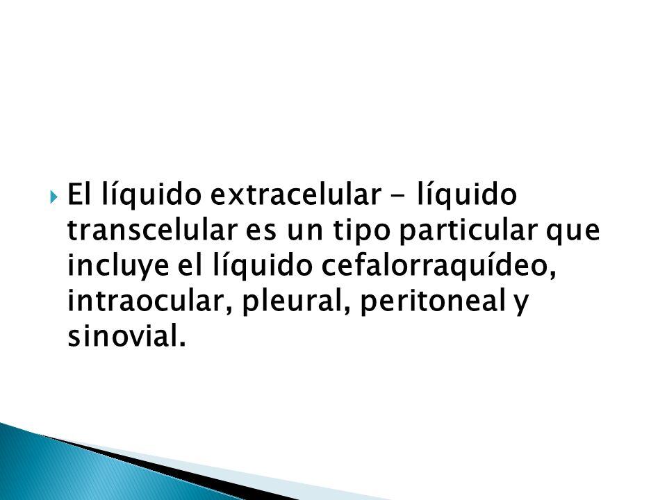 El líquido extracelular - líquido transcelular es un tipo particular que incluye el líquido cefalorraquídeo, intraocular, pleural, peritoneal y sinovial.