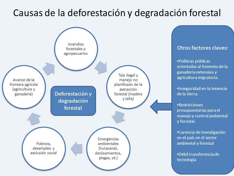 Causas de la deforestación y degradación forestal