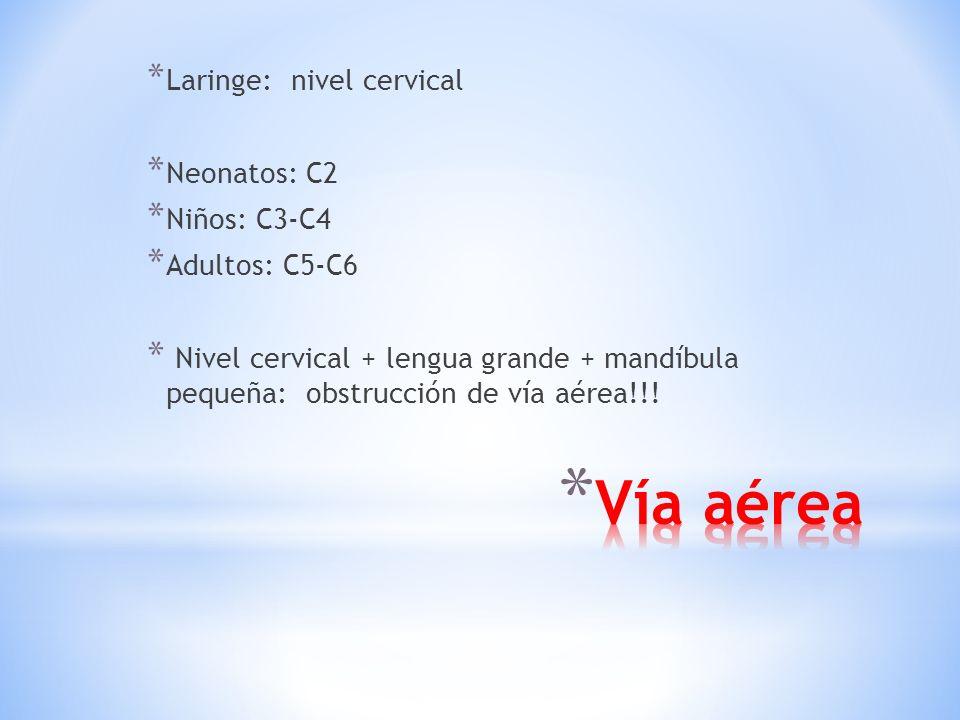 Vía aérea Laringe: nivel cervical Neonatos: C2 Niños: C3-C4