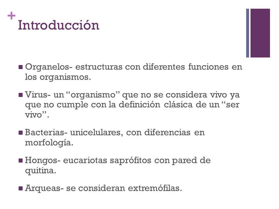 Introducción Organelos- estructuras con diferentes funciones en los organismos.