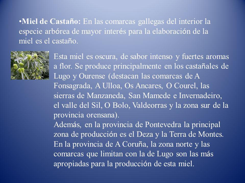 Miel de Castaño: En las comarcas gallegas del interior la especie arbórea de mayor interés para la elaboración de la miel es el castaño.