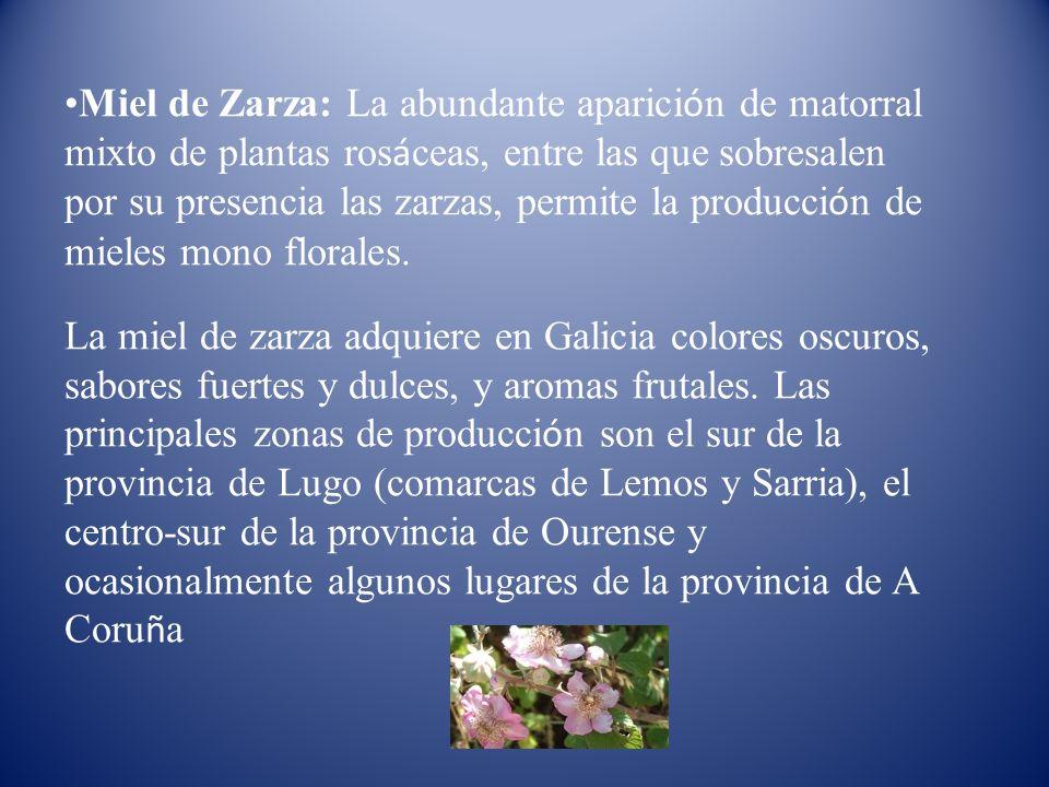 Miel de Zarza: La abundante aparición de matorral mixto de plantas rosáceas, entre las que sobresalen por su presencia las zarzas, permite la producción de mieles mono florales.