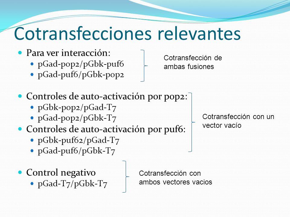 Cotransfecciones relevantes