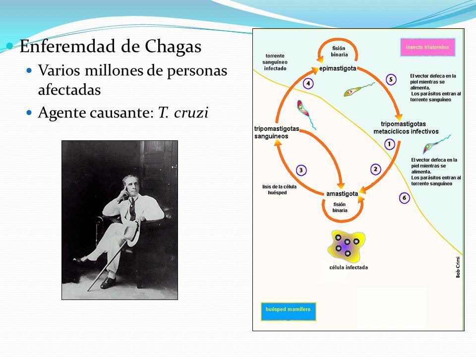 Enferemdad de Chagas Varios millones de personas afectadas