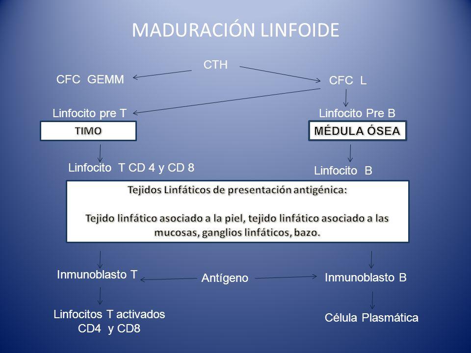 Tejidos Linfáticos de presentación antigénica: