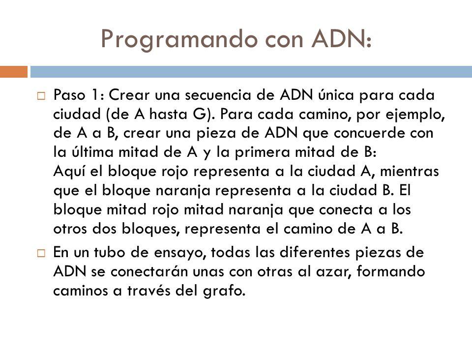 Programando con ADN: