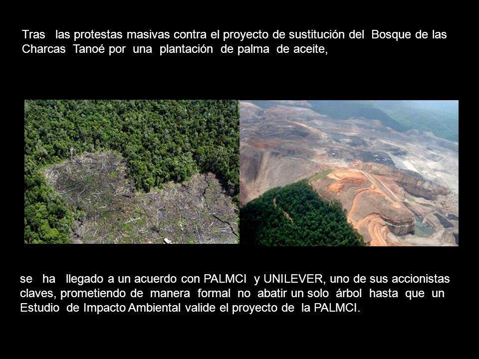 Tras las protestas masivas contra el proyecto de sustitución del Bosque de las Charcas Tanoé por una plantación de palma de aceite,