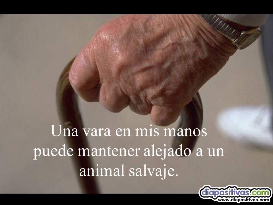 Una vara en mis manos puede mantener alejado a un animal salvaje.