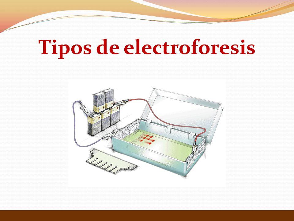 Tipos de electroforesis