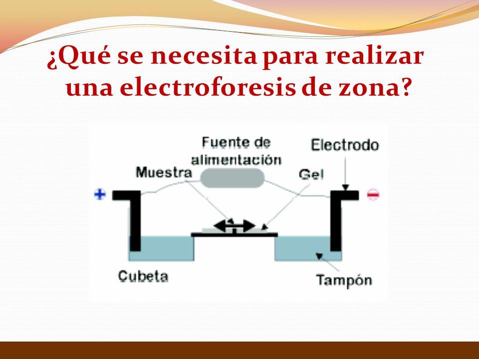 ¿Qué se necesita para realizar una electroforesis de zona