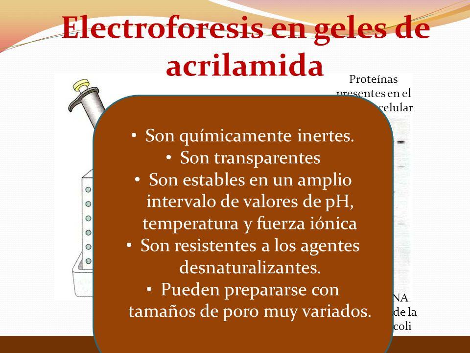 Electroforesis en geles de acrilamida