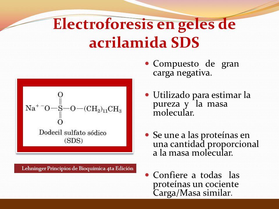 Electroforesis en geles de acrilamida SDS