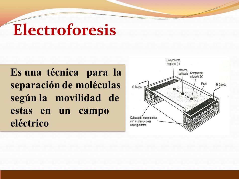 Electroforesis Es una técnica para la separación de moléculas