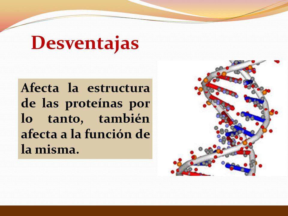 Desventajas Afecta la estructura de las proteínas por lo tanto, también afecta a la función de la misma.