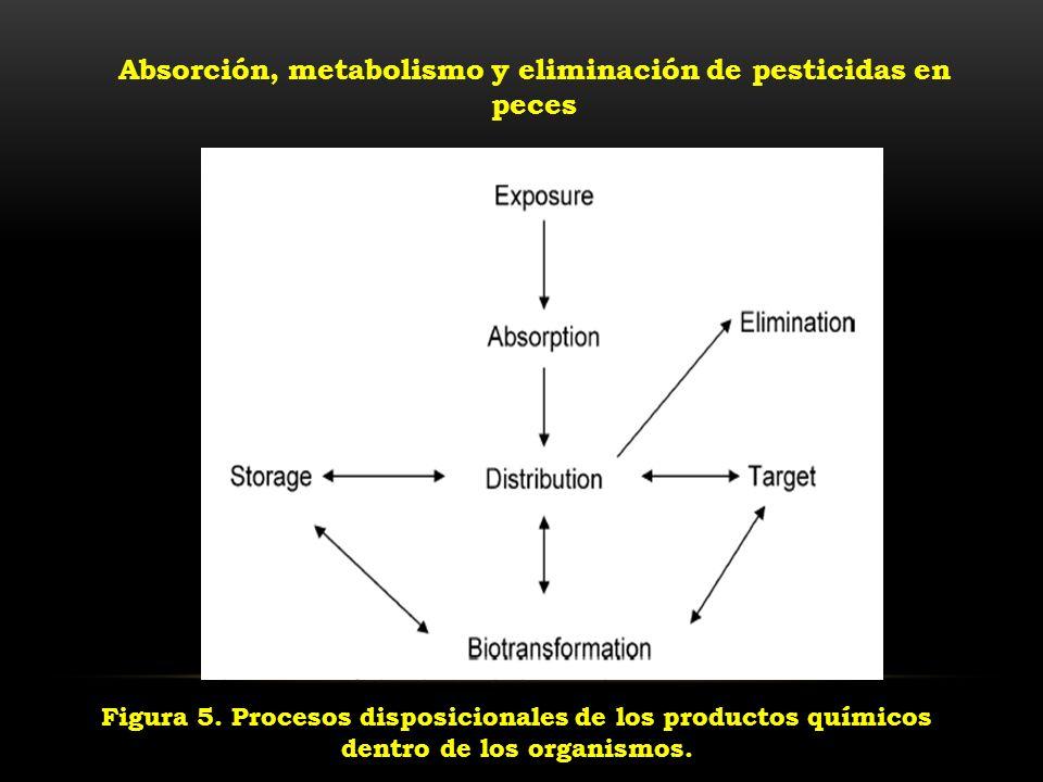 Absorción, metabolismo y eliminación de pesticidas en peces