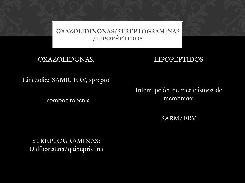 oxazoliDiNonas/streptograminas /lipopéptidos
