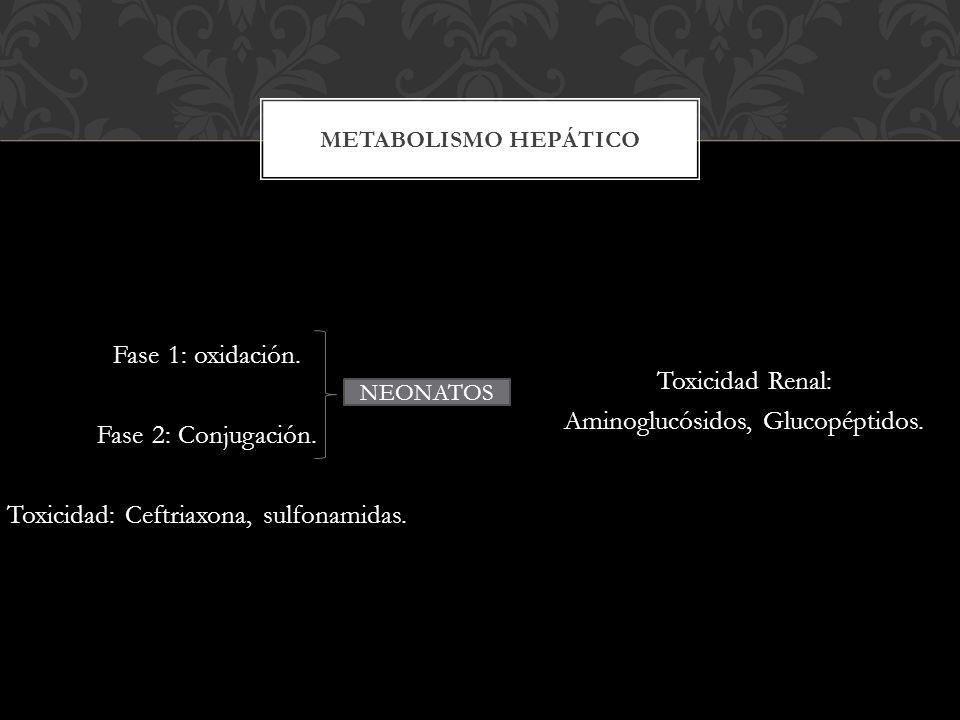 Toxicidad Renal: Aminoglucósidos, Glucopéptidos.