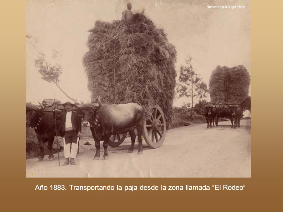 Año 1883. Transportando la paja desde la zona llamada El Rodeo