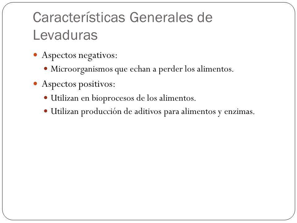 Características Generales de Levaduras