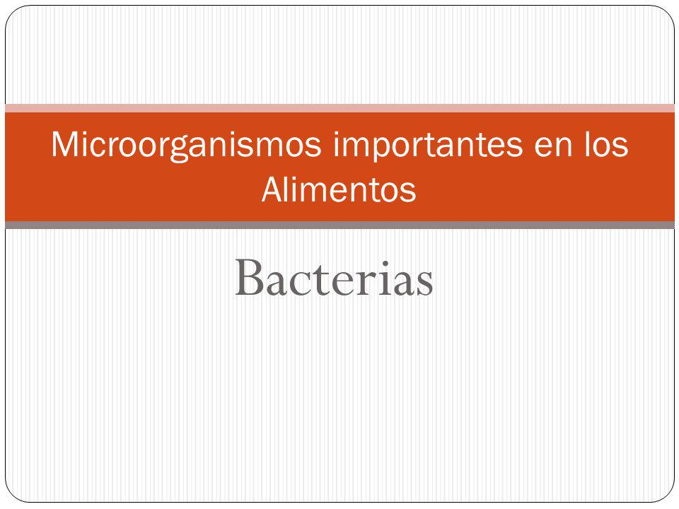 Microorganismos importantes en los Alimentos
