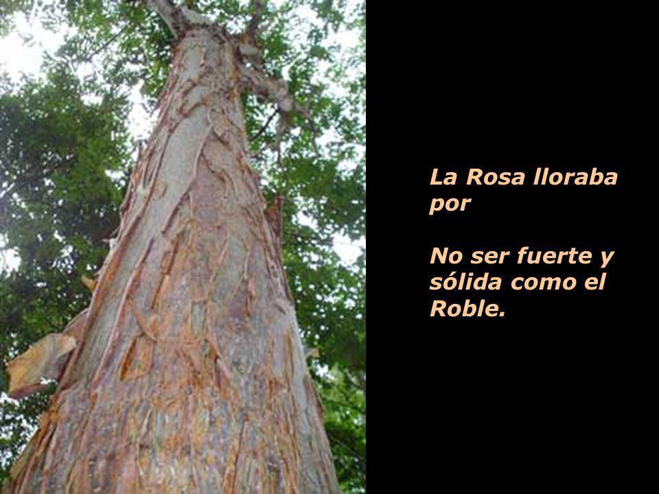 La Rosa lloraba por No ser fuerte y sólida como el Roble.