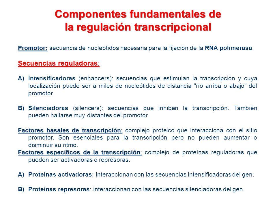 Componentes fundamentales de la regulación transcripcional