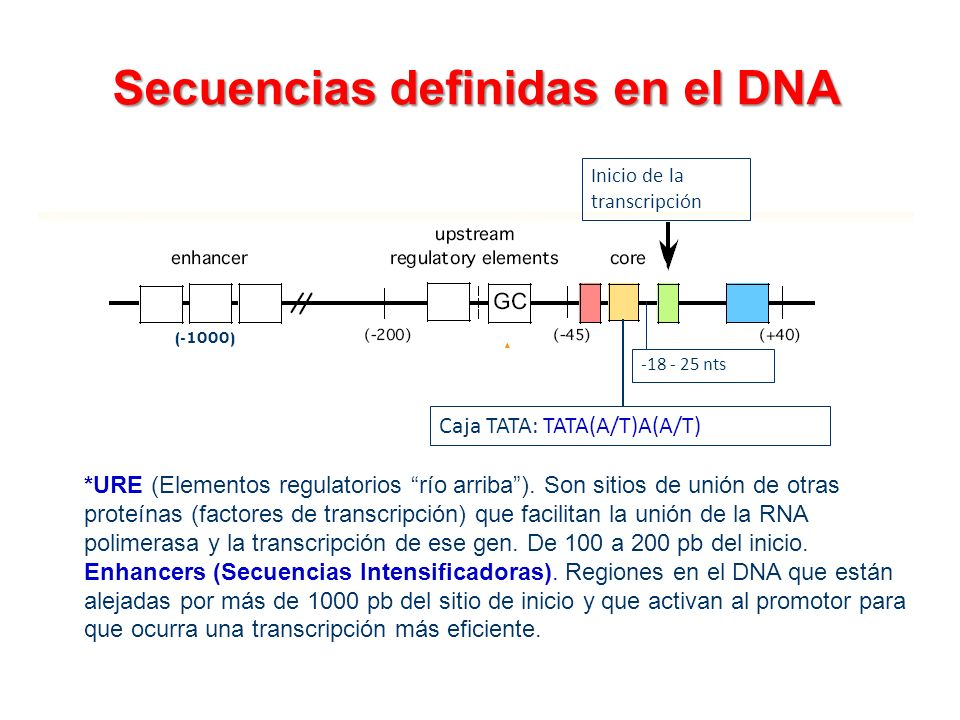 Secuencias definidas en el DNA