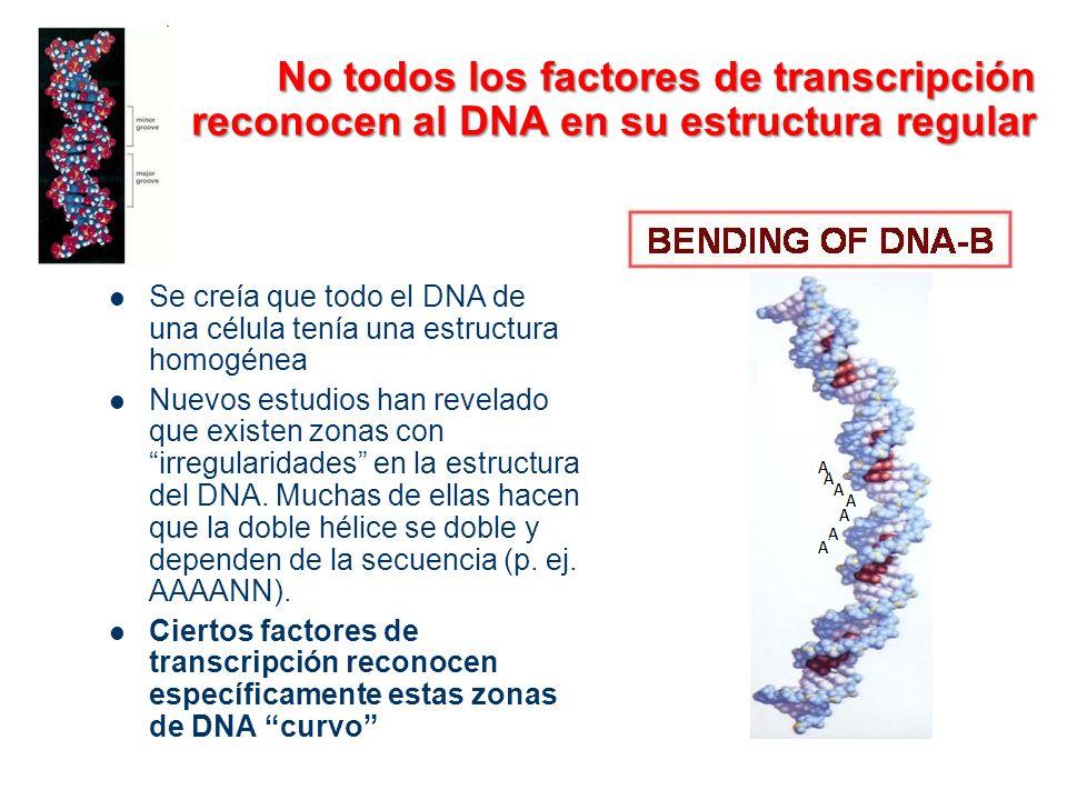 No todos los factores de transcripción reconocen al DNA en su estructura regular
